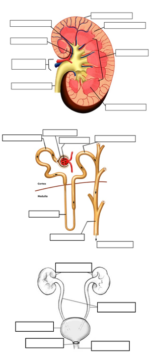 nervous system review guide answers biology corner
